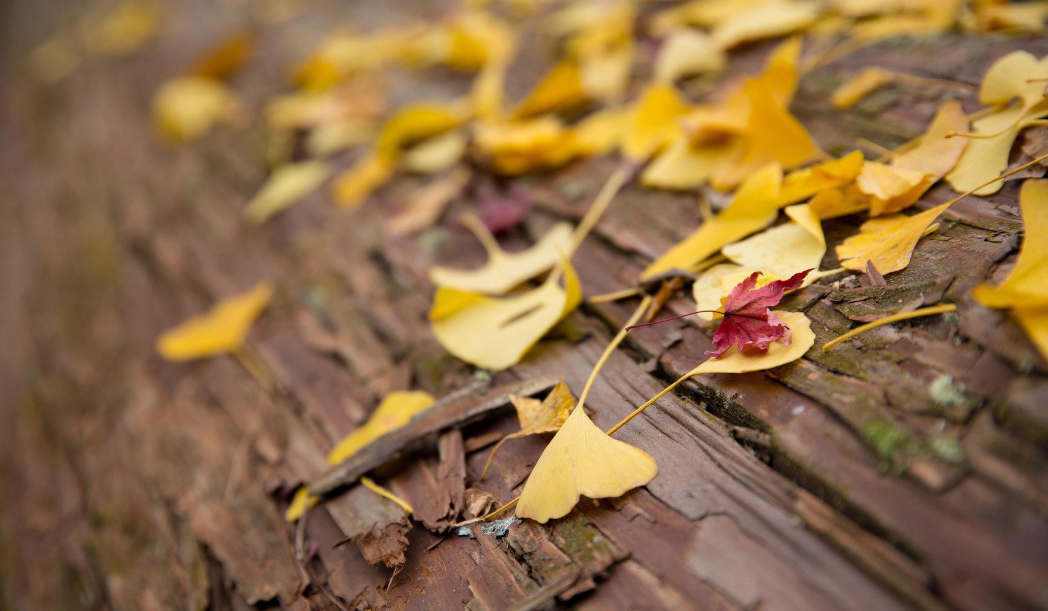kyoto autumn foliage